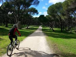 BiciAves. Itinerario ornitológico guiado en bici